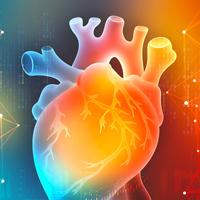 cœur-et-biologie-quantique