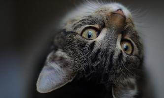 schrodinger-s-cat