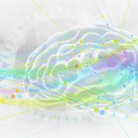 neuroscience-cerveau